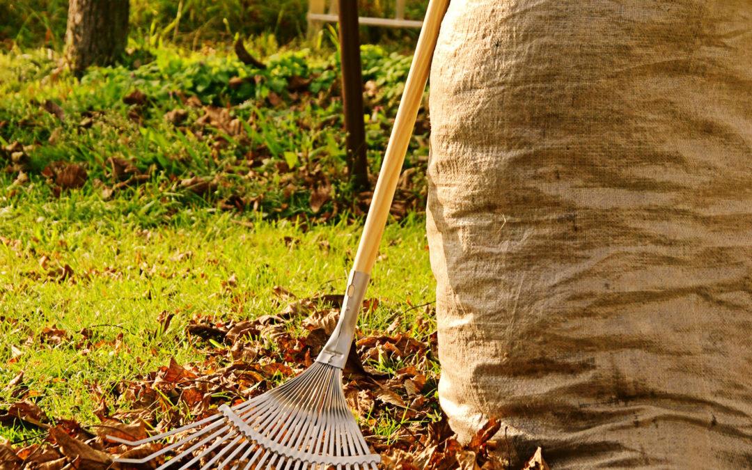 Quoi faire avec les feuilles au sol?
